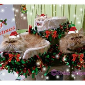 ◆猫川柳 オリジナル15選◆ 愛猫写真と共に『猫川柳』作りました!〓〓1年の【猫川柳】総集編!「師走は何かと忙しいニャン」〓