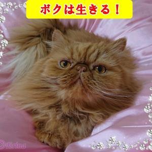 【猫川柳&猫動画】猫愛を猫川柳で語り、猫への愛と可愛さとネコちゃんのお役立ち情報を綴っています〓〓〓優しい繋がり感謝〓〓〓