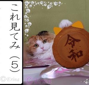 【追記重要連絡】&【保存版】オリジナル猫川柳カルタ50枚!愛猫の子猫時代から今までの写真を猫川柳カルタで表現!これでみんにゃで楽しく過ごすニャン〓〓