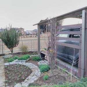 早春の庭 駐車場花壇編