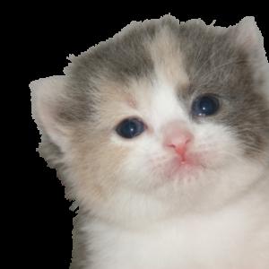 宮城県ペットショップ/子猫多数