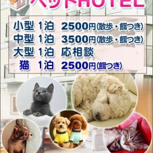 宮城松島近郊のペットホテル/犬猫3000円~