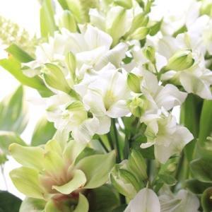 爽やかな色の季節の花を飾って