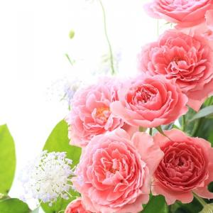 チアガールという名のバラ
