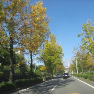 地域の福祉委員会などの活動の合間に、ドライブがてら、外出してリラックスの時間を作っています。