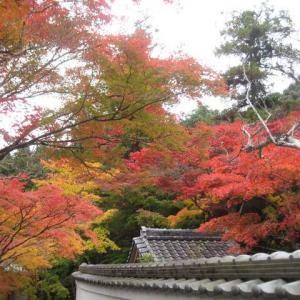 高槻厄除毘沙門天の「神峯山寺」にお参りして、紅葉を楽しんで来ました・・・