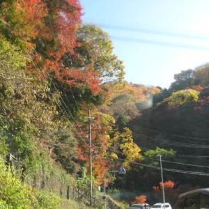 大阪・「箕面大滝」の綺麗な紅葉を見学する予定で出掛けましたが・・・
