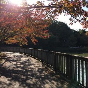 近くの公園で日向ぼっこ~