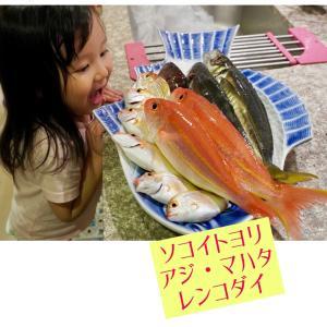 釣魚料理!【ソコイトヨリ・マハタ・アジ・レンコダイ】