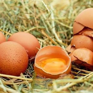 卵騒動から見えるカンボジアの危うさ