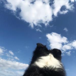 青い空と春もよう