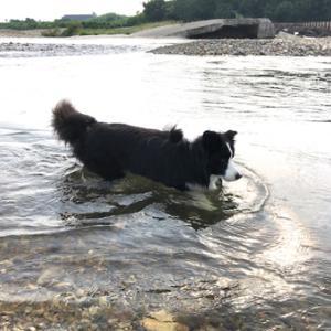水に入らずにはいられません。。