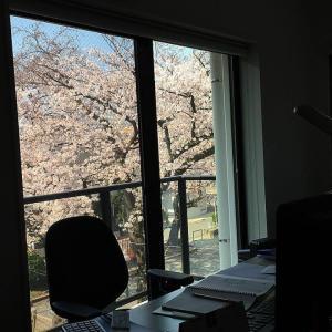 """3/28(木) LIVING元住吉で """" OHANAMI OPEN LIVING """" 開催します"""