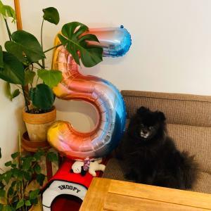 五歳の誕生日でした