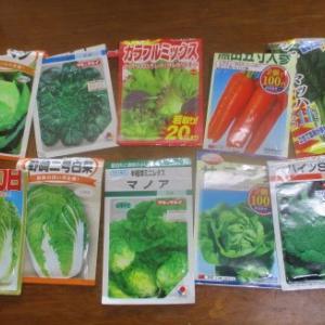 秋冬野菜の種を蒔いてみた