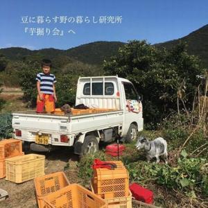 「芋堀り会」~豆に暮らす野の暮らし研究所~