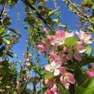 庭の花でお花見☆彡