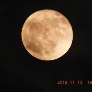 曇りの日にも見上げると月が!