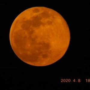 赤い丸い月が昇ってくるのを見た