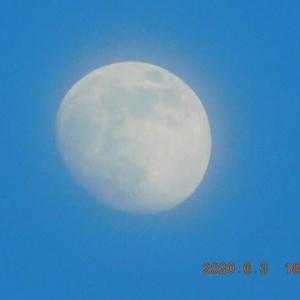 帰宅後に姿を見せてくれた月