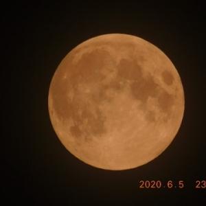 満月がずいぶん低く見える季節になった