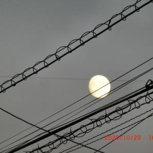 月と火星が近いで~す