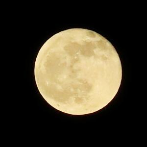 今日も月が綺麗だった