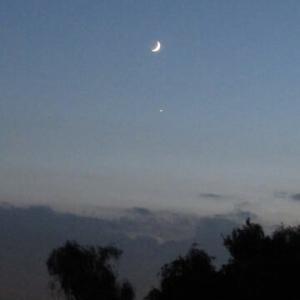 もう半月になった朧月が沈んでいきます