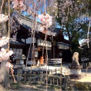 願いを叶えてくれる神社が産土神社なら、「相性の合わない神社」もあるのですか?【再掲載】