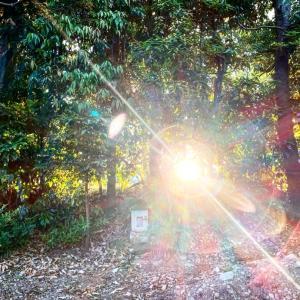 【再掲載】あなたの明暗を分けるのは?災害と霊障と、産土神さまの話。