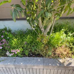花壇ビフォーアフター
