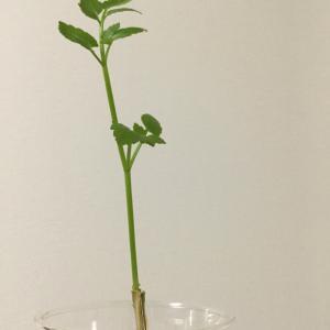 野草…野菜…?( ´ ▽ ` )ノ