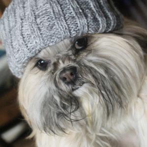 確か寒さには強い犬種のはずなんだが。
