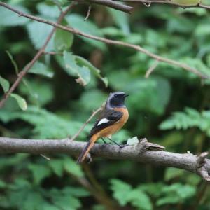 野鳥の訪問
