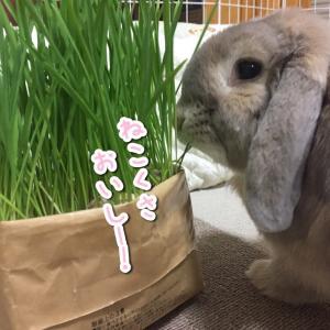 無印猫草を実食!