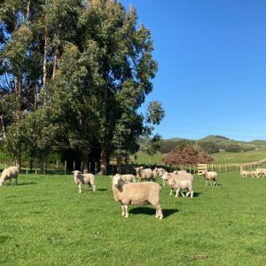 春は畑が忙しくなる季節。