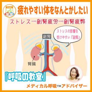 疲れやすい体をなんとかしたい〜副腎(ふくじん)とストレスと〜