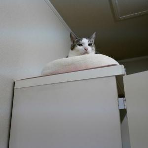おいしい何かが食べたーい<猫もいるの>