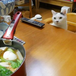 あたたかいものが食べたい!<猫もいるの>
