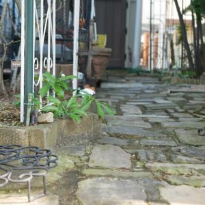 2月3日の庭<単焦点レンズ25ミリ>