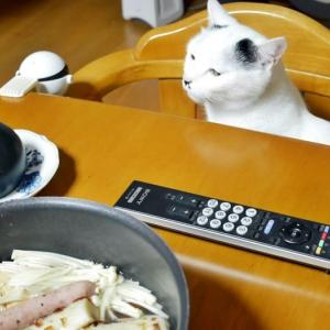 きょうのお夕食は?<猫もいるの>
