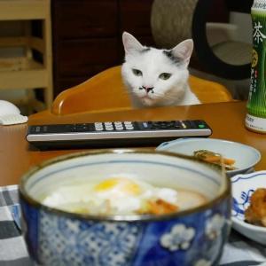 お夕食<猫が主役になってしまったーw>