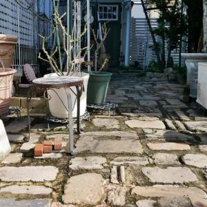 コレクション<25日の庭>