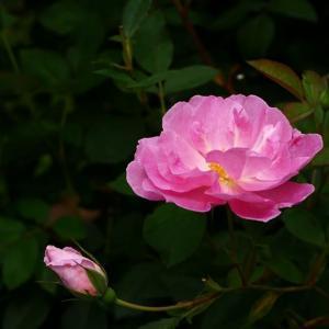 マダムJ子のお庭<お花もレオたんも2/2>