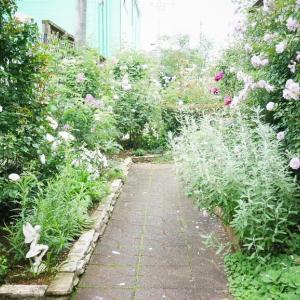 マダムJ子の梅雨ドキのお庭