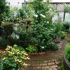 マダムJ子の梅雨ドキの庭 last