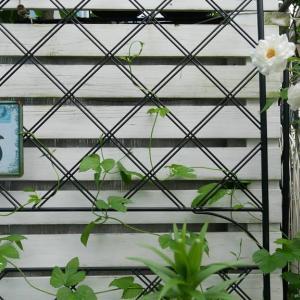 7月6日の庭<グリーンカーテン>