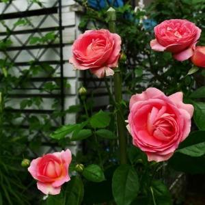 7月13日<秋咲きの花が咲きはじめた!!>