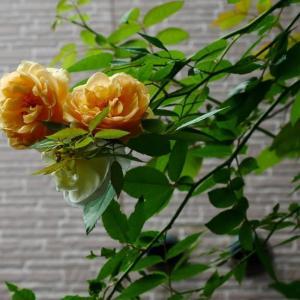 17日の庭<通りから見えない花たち>