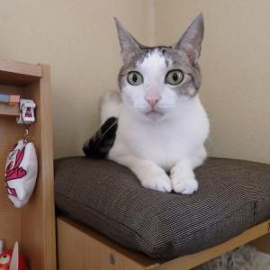 オレの猫<TOKYO2020>
